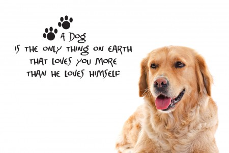 dog-quotes-hd-wallpaper-1