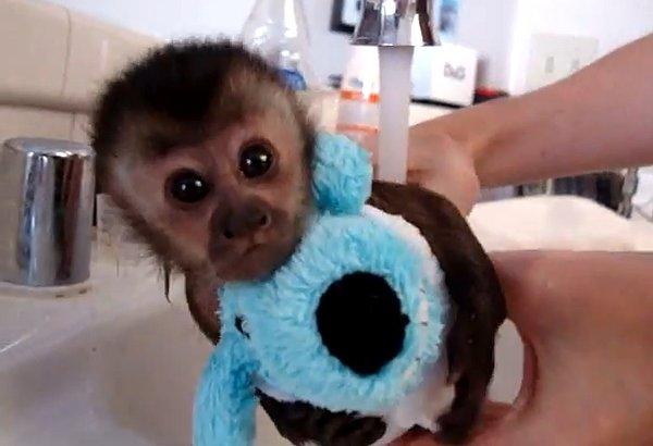 Monkey-Bath
