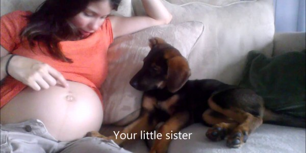 this-video-showing-a-puppy-appro-600x300