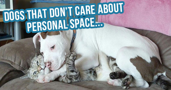 10-dogs-that-dont-care-about-personal-space-570x300
