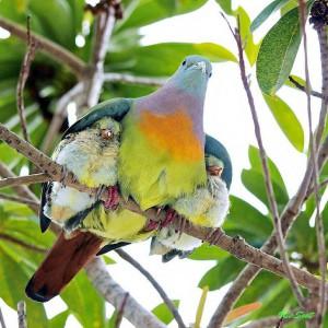 birdieswings