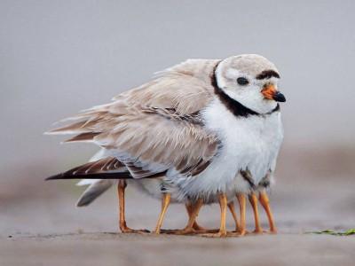 birdlegs