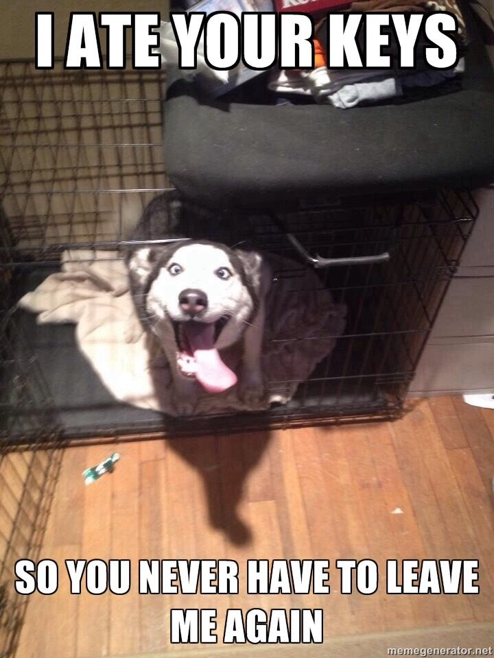 Overly+attached+dog+if+you+want+more+funny+posts+like_5e0294_5285402