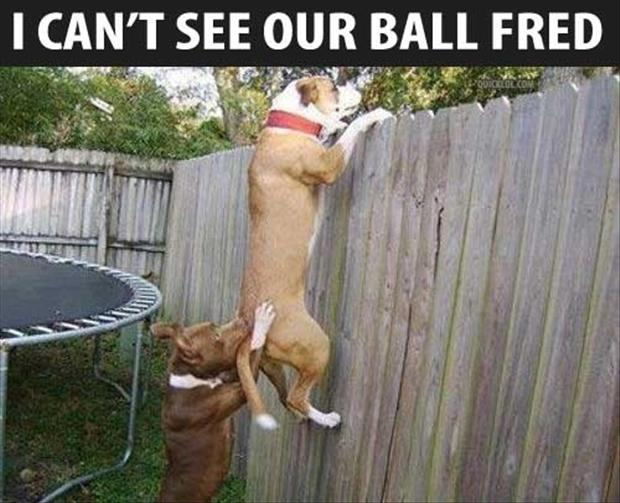 a-dog-trying-to-see-his-balls