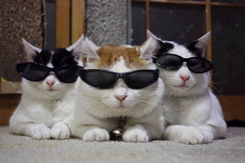 cats-in-glasses-1