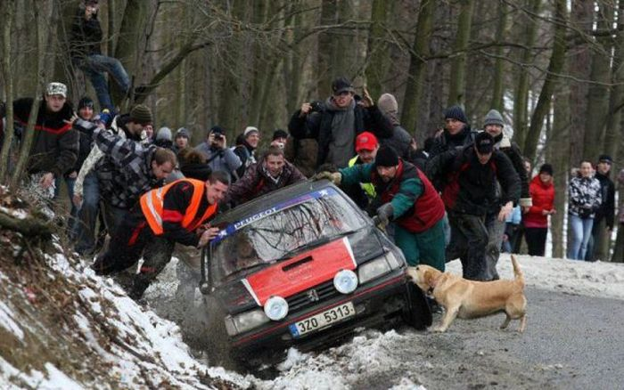 dog-helping-out-at-rally-event