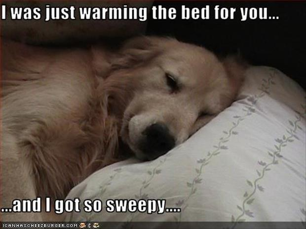 dog-sleeping-in-your-bed