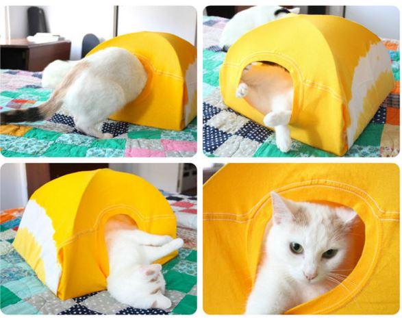 tent-cat